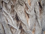 Bark.  Or is it?