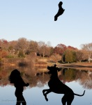 Silhouette of GreatDane