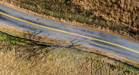 Aerial Tree