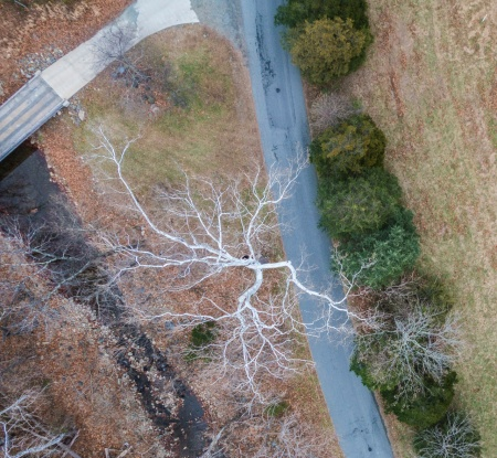 sycamore aerial